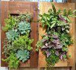 Port Kells Nurseries - Garden Photo Blog: Living Wall Planter