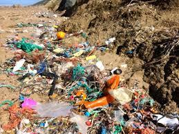 Pollution and Habitat Destruction  The Human Factors Contributing