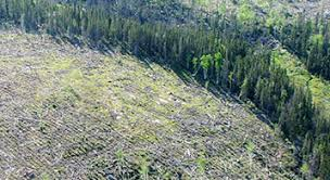 habitat loss for bird populations across Canada  as well as contributing to climate change  Find out how human disturbance of the Canadian Boreal Forest     Boreal Songbird Initiative