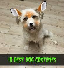 Winnie Pooh Dog Halloween Costume 10 Dog Costumes