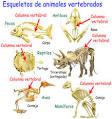 Los <b>vertebrados</b> típicos tienen