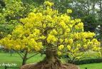 HCM - Dịch vụ chăm sóc, thiết kế các loại <b>cây</b> kiểng tận nhà &quot;Phong <b>...</b>