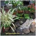 Monly - Variety of Monly - จัดสวนหย่อมในสำนักงาน หรือบริเวณหน้า ...