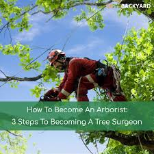 how to become an arborist 3 steps to becoming a tree surgeon sep
