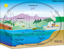 Deforestation and the Carbon Cycle