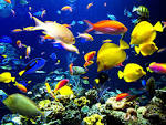 Kids-n-fun | Wallpaper Tropical fishes