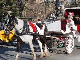 Horse and Carriage Rides in Central Park Central Park horse drawn carriage central park