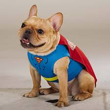 Winnie Pooh Dog Halloween Costume 47 Halloween Costumes Dog Thefashionspot