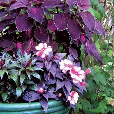 745 best container garden glory images on pinterest flowers