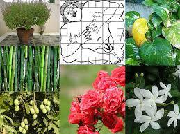 Home Design Plans As Per Vastu Shastra Vastu Shastra Dream Home Guide