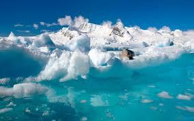 ocean sea antarctic ice antartic seal rock icy blue hd wallpaper
