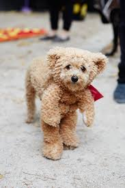 the 40 best dog costumes ever teddy bear costume bear costume