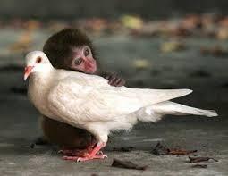 Monkey hugging Bird