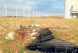 of wind farms on birds.