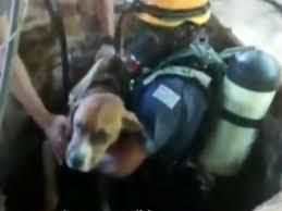 Cachorro cai em poço de chácara e é resgatado por bombeiros em ...