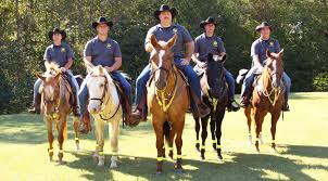 thanksgiving horse pictures york county sheriffs sc official website