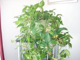 how to maintain indoor plants garden guides