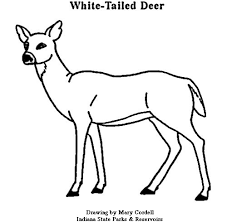 coloring pages of tools dnr coloring pages animals