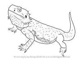 learn draw bearded dragon lizards step step