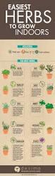 best 25 indoor window garden ideas on pinterest indoor herbs