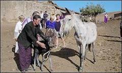 Mula dá à luz um burro em vilarejo do Marrocos | BBC Brasil | BBC ...