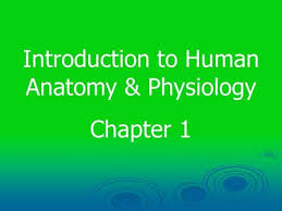 Anatomy And Physiology Chapter 1 Review Answers Chapter 1 Study Guide Questions Ppt Video Online Download