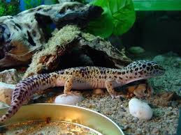 Pet shop ,,Zoo Amazona'' Images?q=tbn:ANd9GcTGmP0Q8QvadoJlRD2O6U66B1Igd9vosmWS_G-0IK4l9euMTb5A