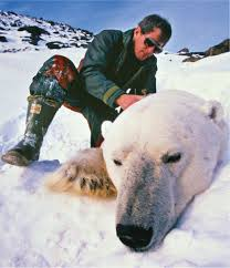 Global warming could leave Polar bears EXTINCT if it is not