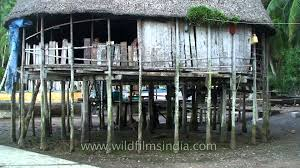 House On Pilings by House On Stilts In The Nicobar Islands Archipelago Youtube