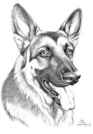 download coloring pages german shepherd coloring pages german