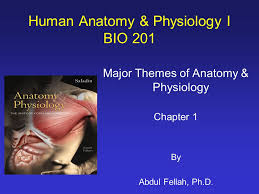 Anatomy And Physiology Chapter 1 Review Answers Human Anatomy U0026 Physiology I Bio Ppt Video Online Download