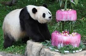 Happy Birthday, Tai Shan