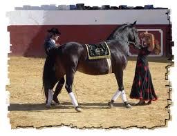 Mis amores los caballos Images?q=tbn:ANd9GcTJheaNHhrshrVny_0V3MS415ykTExSsyed_y4FGT8PBCUIox8&t=1&usg=__ycQ6OyKlfdLcdxz4fzuhcsj5V1I=