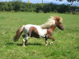 Udomi jednog od konja! - Page 6 Images?q=tbn:ANd9GcTJyRC-TCBJVH0Q-R44maEOUTTX4HLS6OdhuXFgyL9s5h6arKuC