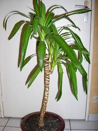 Toutes les plantes avec leur tolerence de température minimal pour l'hiver. Images?q=tbn:ANd9GcTK8Ku0uTjqXgDGDkaHw8VMNd5D5-jr7VbJSu5uhDLOReHYINjKHlMatsjz