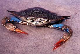 Panacea Blue Crab Festival
