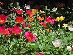 north india garden calendar for april