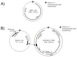 viruses free full text begomovirus associated satellite dna