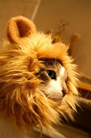 108 best costume cat images on pinterest animals kitty cats and
