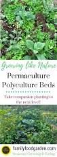 companion vegetable garden layout permaculture what is polyculture