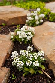 Rock Garden Plants Uk by Low Maintenance Garden Design Ideas Uk The Visual And Main Tenance