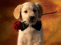 Mensagens e imagens românticas para Facebook