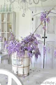 Wisteria Home Decor by 790 Best Wisteria Lane Images On Pinterest Flowers Plants And