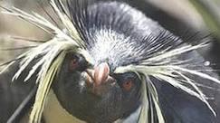BBC Brasil - Notícias - Com ciúmes de pandas, pinguins de ...