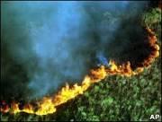 BBC Brasil - Notícias - Mata Atlântica é a quinta floresta mais ...