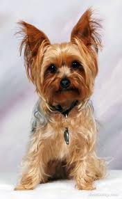 Je veux un chien  Images?q=tbn:ANd9GcTNPsC65xj2OatRCb5fYNjhyxqZ6z3GqiU_Szu9_NrjFyIfh3qn
