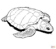 nesting kemp u0027s ridley sea turtle coloring page free printable