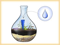 how to grow a garden in a bottle 6 steps with pictures