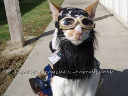 spirit of halloween store locations 2013 158 best pet halloween costumes images on pinterest homemade