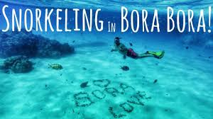 swimming with sharks and rays in bora bora snorkel tour youtube